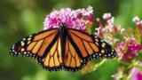 16 espèces de papillons battent de l'aile en France