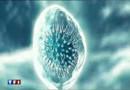 "La grippe H1N1, un virus ""silencieux"" ?"