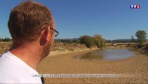 Aude et Alpes-Maritimes : les agriculteurs subissent la sécheresse