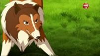 Lassie en streaming