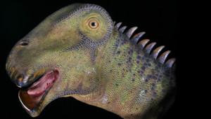 Nigersaurus Taqueti dinosaure