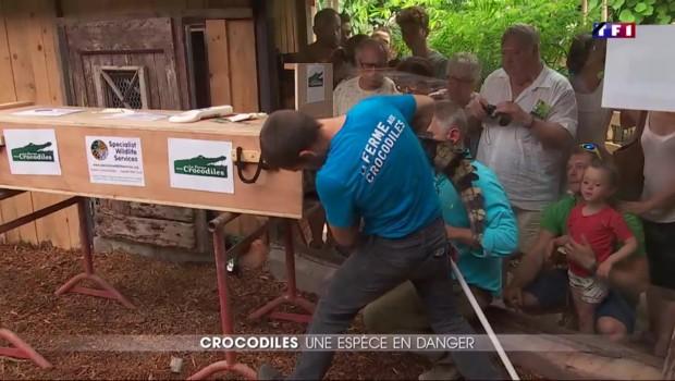 Dans la Drôme, une ferme œuvre à la sauvegarde des crocodiles