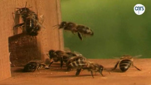 Quel est le prix des abeilles ? (12/19)