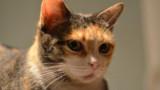 Un cas de rage détecté chez un chaton, une première depuis 2001