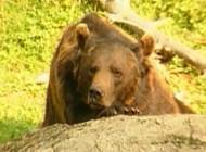Nature : Mort de l'ourse Palouma