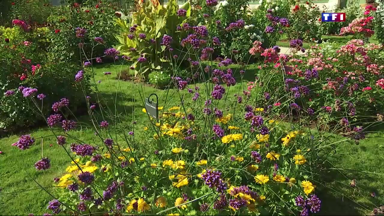 A orl ans les floraisons tardives du jardin des plantes for Jardin des plantes chambery