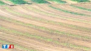 soja champs agriculture economie
