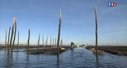 La préfecture de la Gironde a étendu jeudi à l'ensemble du Bassin d'Arcachon l'interdiction temporaire de la pêche et de la consommation des huîtres et coques.