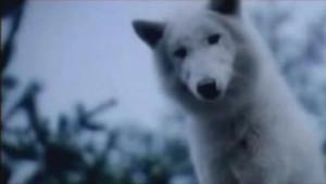 """Misha Defonseca best-seller """"Survivre avec les loups"""" Véra Belmont"""