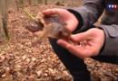 Le 20 heures du 3 mars 2014 : Avec le biomim�sme, les scientifiques imitent la nature - 1641.4983376464845