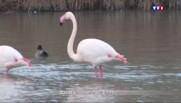 """Zoom sur la Camargue, """"station service"""" pour 350 espèces d'oiseaux"""