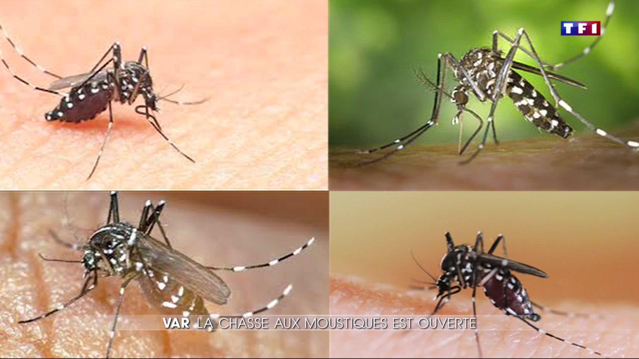 Var la lutte contre le moustique tigre a commenc le - Lavande contre moustique ...