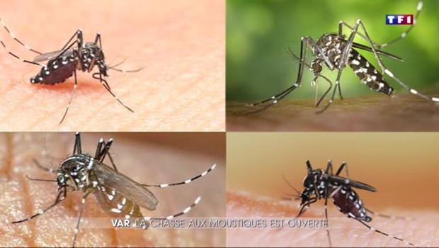 Var : La lutte contre le moustique tigre a commencé