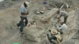 VIDEO. Une queue de dinosaure découverte au Mexique