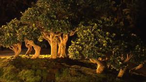 Le 13 heures du 3 octobre 2014 : De magnifiques bonsa��ontempler �ulhouse - 1898.2842651977542