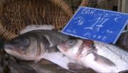 Le 13 heures du 13 février 2015 : En hiver, le poisson affiche des prix bas - 916.3159792175293