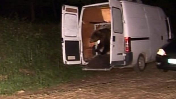 TF1/LCI Lâcher de l'ours Hvala en toute discrétion