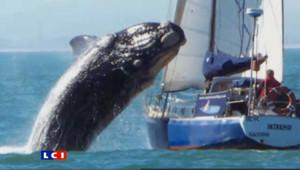 La baleine leur est tombée sur la tête : les images