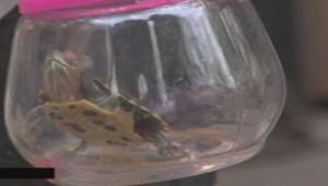 Chine : porte-clé contenant une tortue vivante.