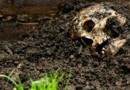Photo prétexte d'un crâne humain déterré en forêt