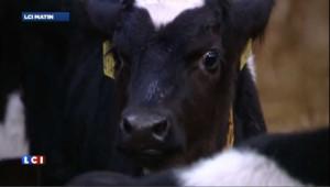Moutons, chèvres et bovins : un nouveau virus détecté en Europe