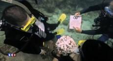 Etats-Unis : un couple américain se marie ... sous l'eau !