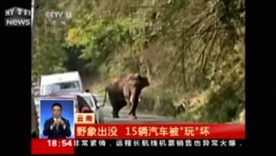 En Chine, un éléphant s'égare et endommage des voitures