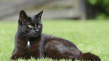 Un chat noir - Image d'illustration