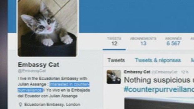 chaton juliann Assange Twitter