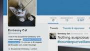 chaton juliann Assange Twitter
