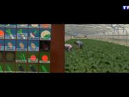 Le 20 heures du 27 avril 2015 : Les légumes virtuels ou comment créer son potager numérique - 1780.702