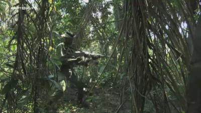 Extrait SEPT à HUIT : Reportage exclusif au coeur de la guerre pour l'ivoire