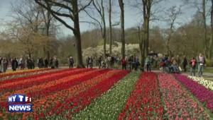 Pays-Bas : ils célèbrent Van Gogh à l'aide de tulipes !