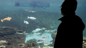 aquarium poissons