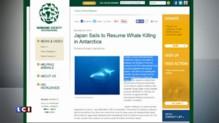 Japon : après un an de suspension des expéditions, les baleiniers ont repris la mer
