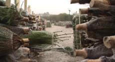 Le 20 heures du 26 novembre 2014 : No�: business de sapins au pays de l%u2019artichaut - 1067.959