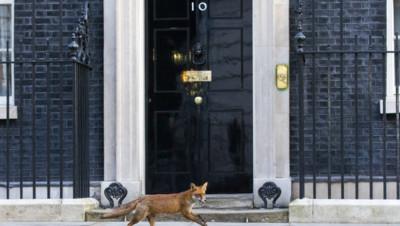 Archives : le 10, Downing Street, résidence du chef du gouvernement britannique