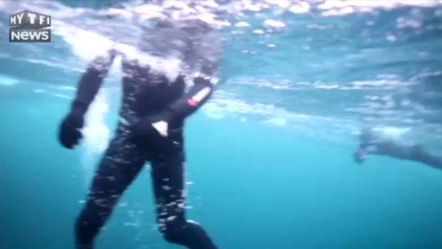 """TF1 a plongé avec les """"baleines tueuses"""" : l'envers du décor"""