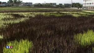 """Des Japonais recréent l'affiche du film """"Autant en emporte le vent""""...avec des feuilles de riz !"""