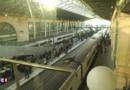 Un migrant égyptien s'électrocute gravement en tentant de monter à bord d'un Eurostar