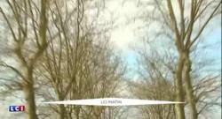Des glissières contre les platanes ? La dangerosité des arbres sur les routes pointée du doigt