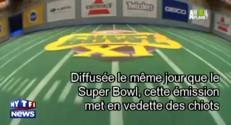 """""""Puppy Bowl"""", le Super Bowl a aussi sa version avec des chiots"""