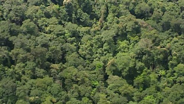 TF1/LCI : Vue aérienne d'une forêt