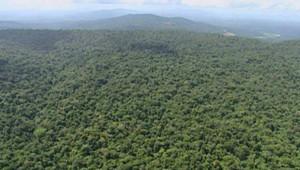 TF1/LCI : Vue aérienne de la forêt guyanaise
