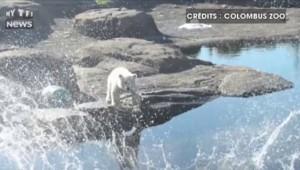Nora, oursonne polaire de 6 mois, et déjà star