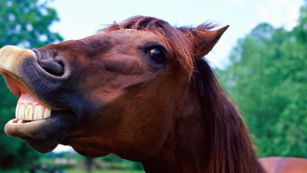 cheval poney