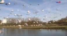 Le 13 heures du 4 mai 2015 : Le printemps signe le retour en compétition des colombophiles - 1776.146