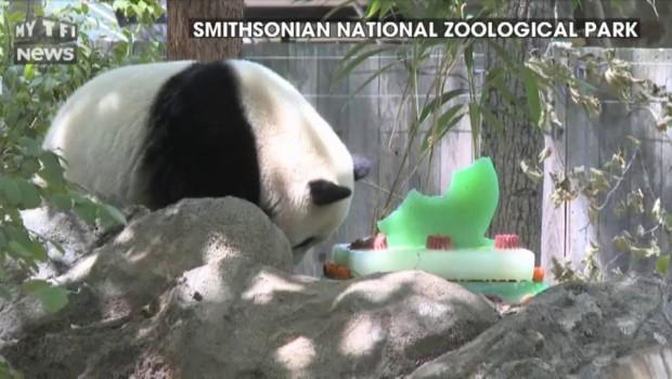 Le panda Bao Bao a fêté ses trois ans avec un gâteau géant