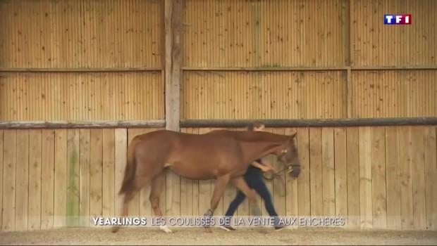 """Deauville: dans les coulisses de la plus grande vente aux enchères de chevaux """"yearling"""""""