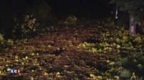 Orages : la chute d'un arbre tue une jeune femme dans le Midi-Pyrénées